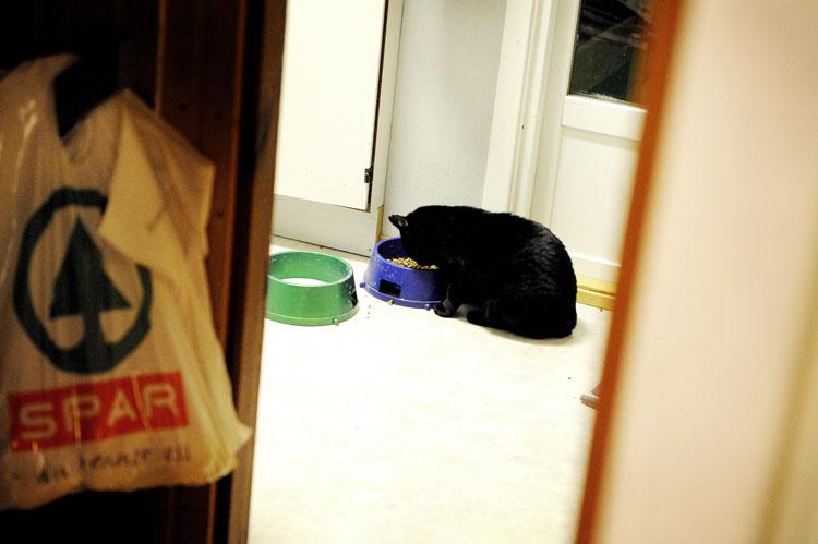 Han har kommet seg inn gjennom katteluka og hiver seg over matskåla.
