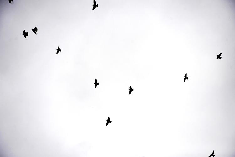 birds2_web