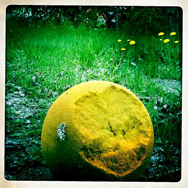 gul_ball