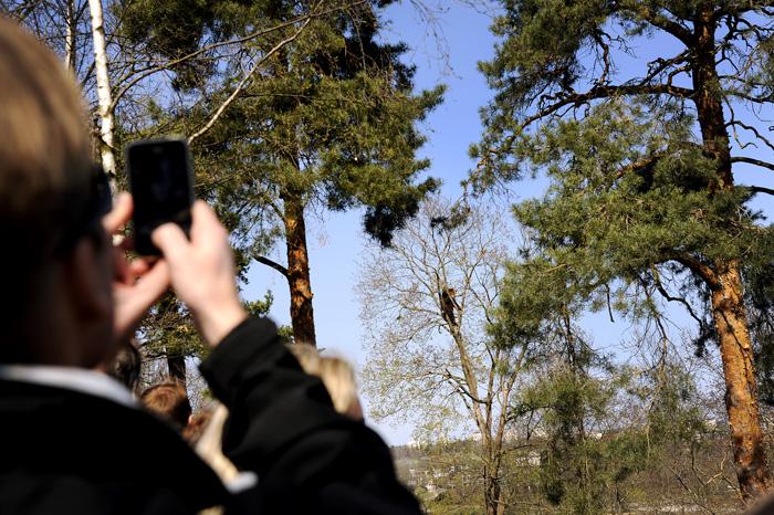 Som mitt forrige bilder i påska del 1, så så jeg en kråke. Kråka satt i et tre og kikka på en bjørn som var på klatretur. Stedet var Skansen ute i Djurgården, en liten båttur (eller trikketur) utenfor Stockholm.