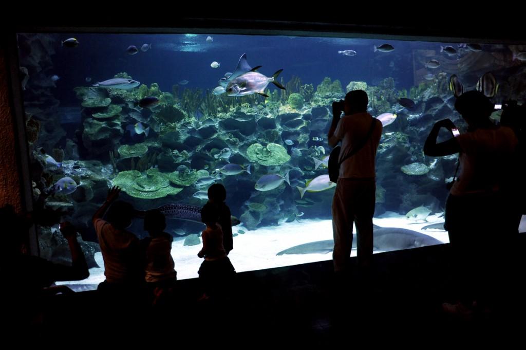 KL Aquarium. Masse rare fisk. Masse folk.