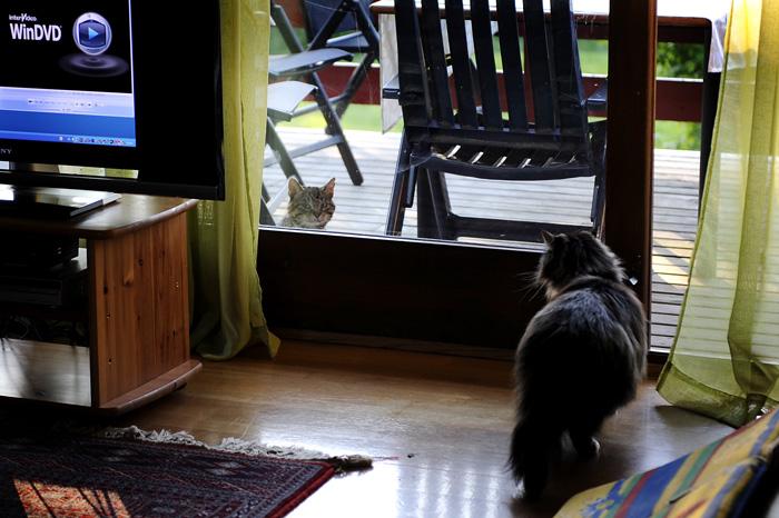 En fremmedkar er på verandaen. Pondus lurer på hvem han er...