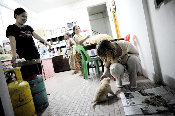 Fanky, det nye familiemedlemmet i Joks residens. En hundevalp rundt 8-10 uker.
