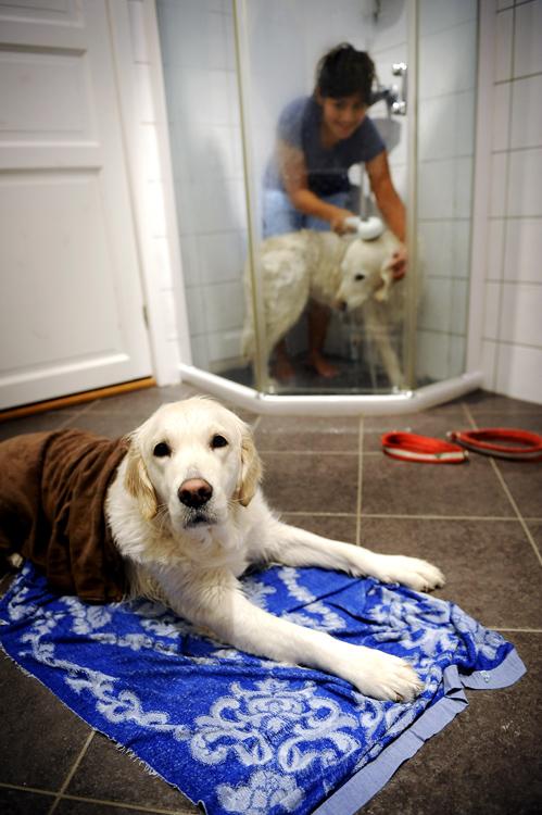 Thea slapper av og tørker seg etter julevasken. Goldie blir vasket.