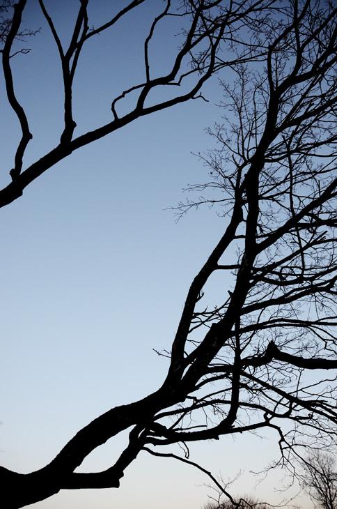 Oslo 12.01.2013. Tr¾r. Greiner i Stensparken. FOTO: JOAKIM S. ENGER