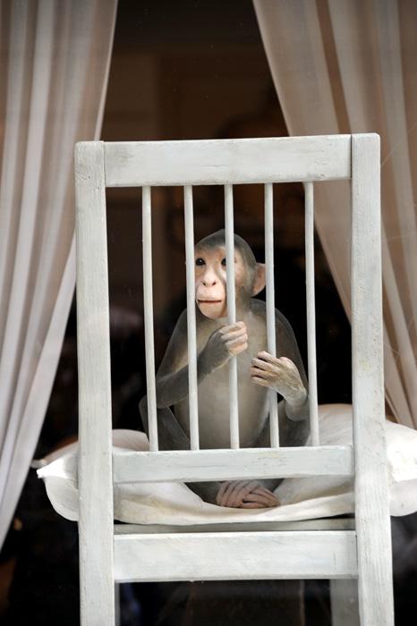 Denne apen satt i et butikkvindu sammen med denne reven.