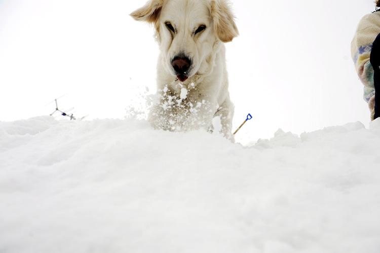 The vil hjelpe til med å måke. Her prøver hun å dytte snøen av taket.