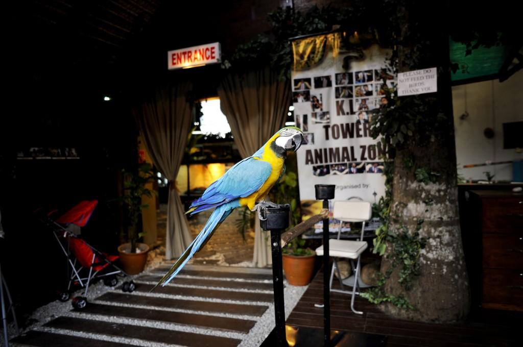 En papegøye ønsket alle velkommen til animal parken.