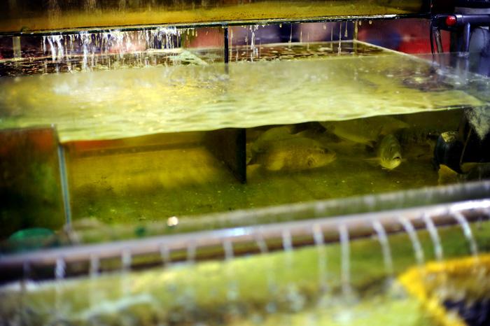 I Miri var det en fiskerestaurant som hadde fisk, krabber, reker, hummer, og diverse annet fra sjøen i akvarier inne i restauranten.