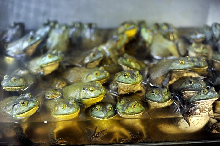 De hadde også frosk. Men vi tok ikke sjansen på å ete dem.