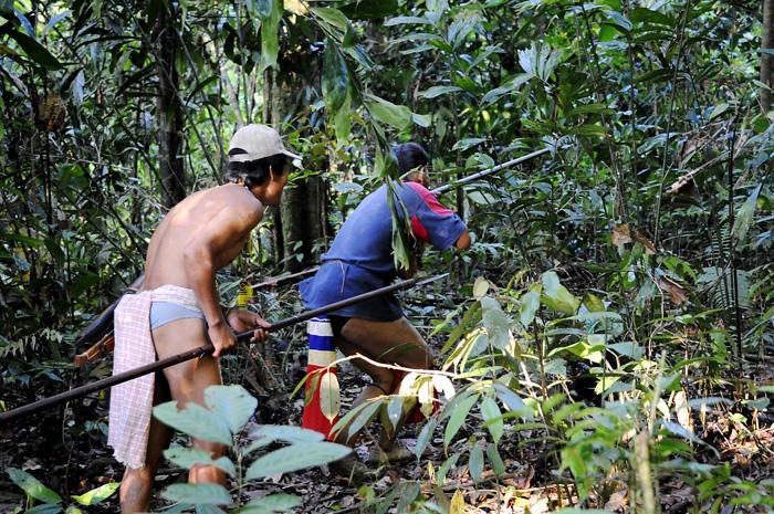 Nomade penanene på jakt etter mat. Her er de klare med blåserørene sine.