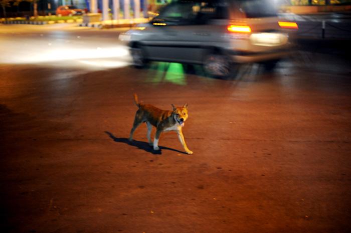 Vi så veldig mange katter ute på Borneo. Ikke så mange hunder, men i Marudi så vi noen skabbete løshunder.