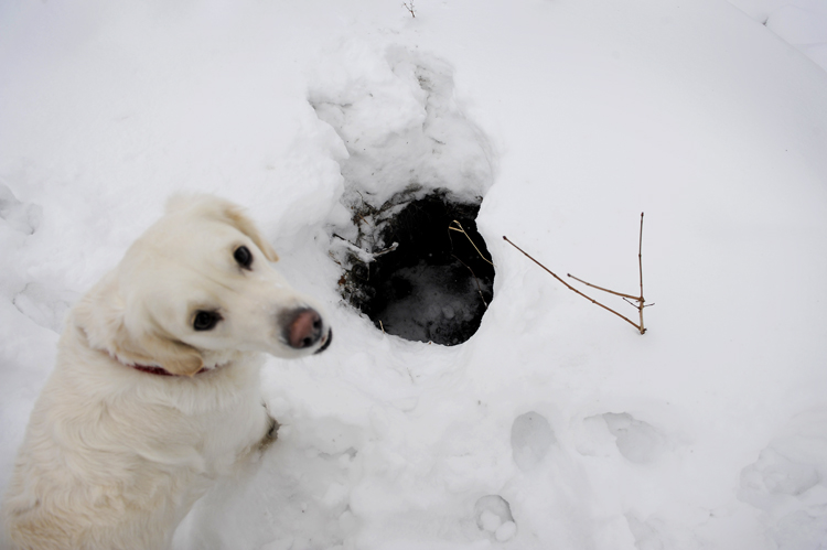 Og nå har Thea lært å passe på når hun leker i snøen. Dette hullet i bakken kommer hun ikke til å dette ned i en gang til.